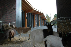 Kinderboerderij en MFA Wachterliedplantsoen Amsterdam