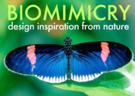 Minister Verhagen sluit Green Deal met biomimicryNL
