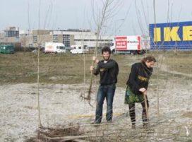Hosper krijgt Groen Lintje voor guerrilla gardening