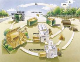 VvdW – Nederlandse bossen leveren biomassa voor duurzame energie