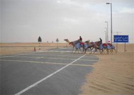 CULD wint tender Madinat Zayed in Abu Dhabi, VAE