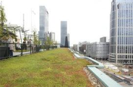In Rotterdam groeien de groene daken