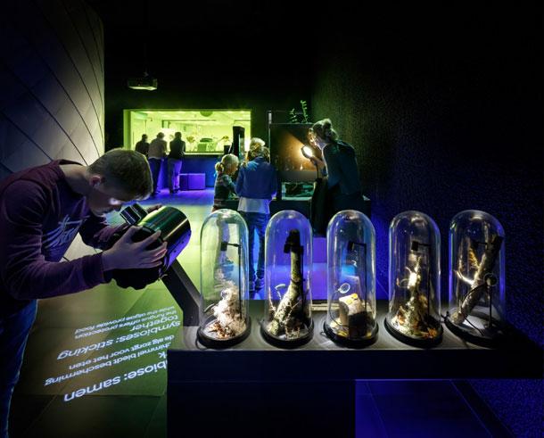 Microbenmuseum Kossmann.deJong