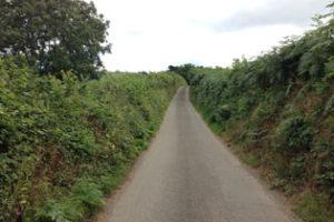 Blog – Detail 18: Hedge Verlangen naar het park