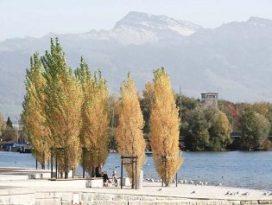 Wingender Hovenier wint Zwitserse ontwerpwedstrijd