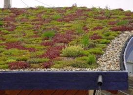 Platte daken worden groendaken in Antwerpen