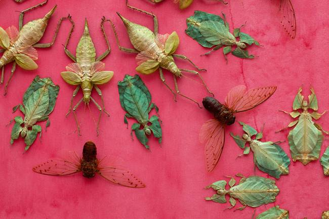 Kunstwerk met insecten door Jennifer Angus
