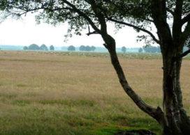 Stichting het Landschapsmanifest roept op tot aanpak verrommeling