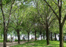 Stadsgroen levert miljoenen op