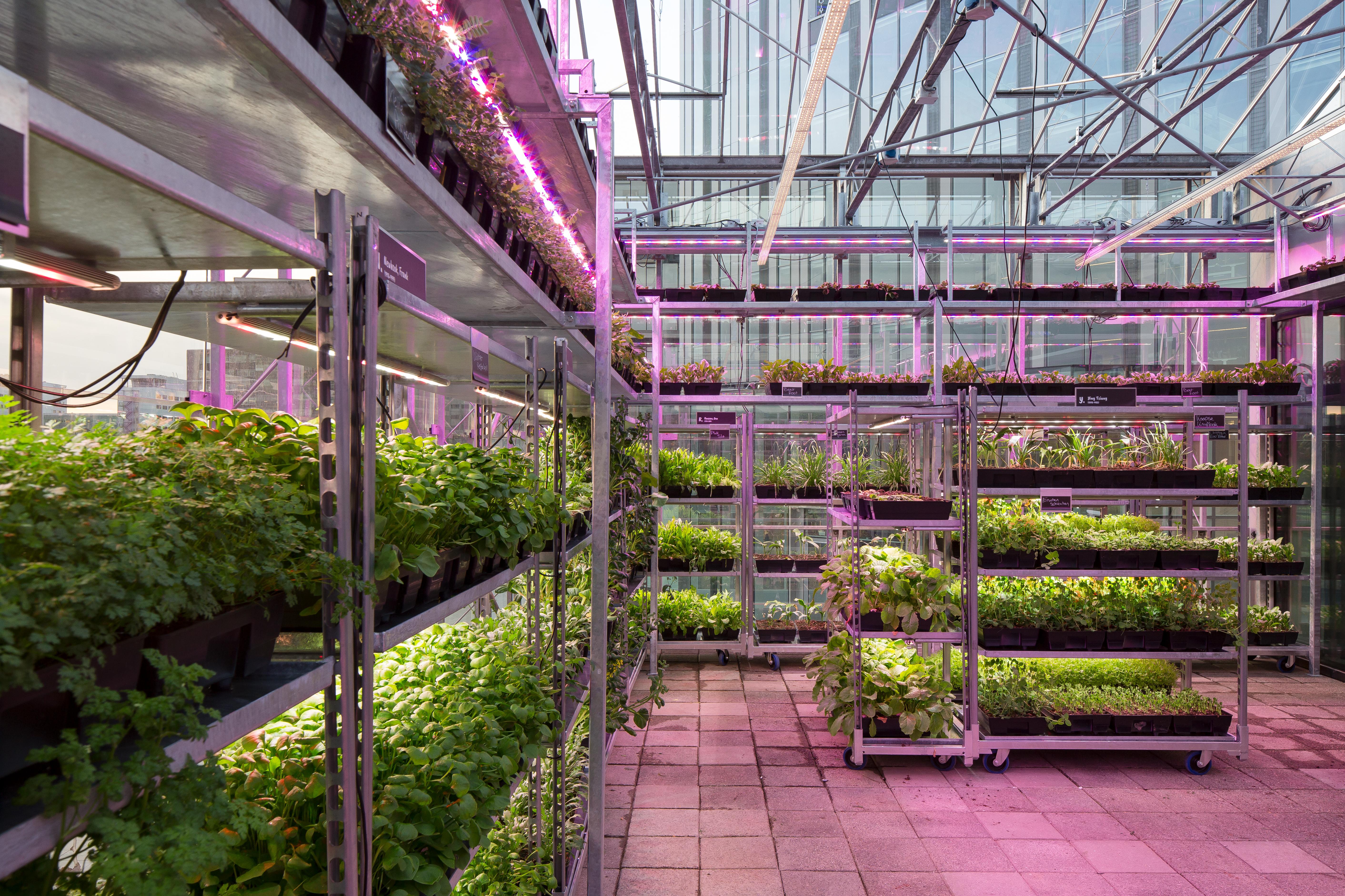 <p>The Green House door cepezed, beeld cepezed | Lucas van der Wee</p>