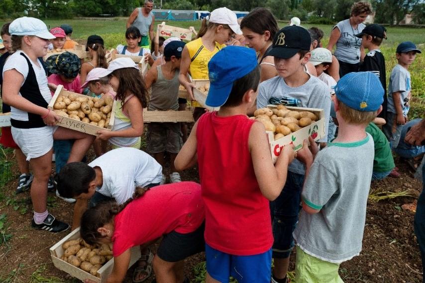 Schoolkinderen helpen mee met de oogst voor hun school maaltijden in Mouans-Sartoux (Fr)