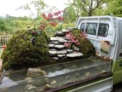 Blog – Mobiele Japanse tuintjes