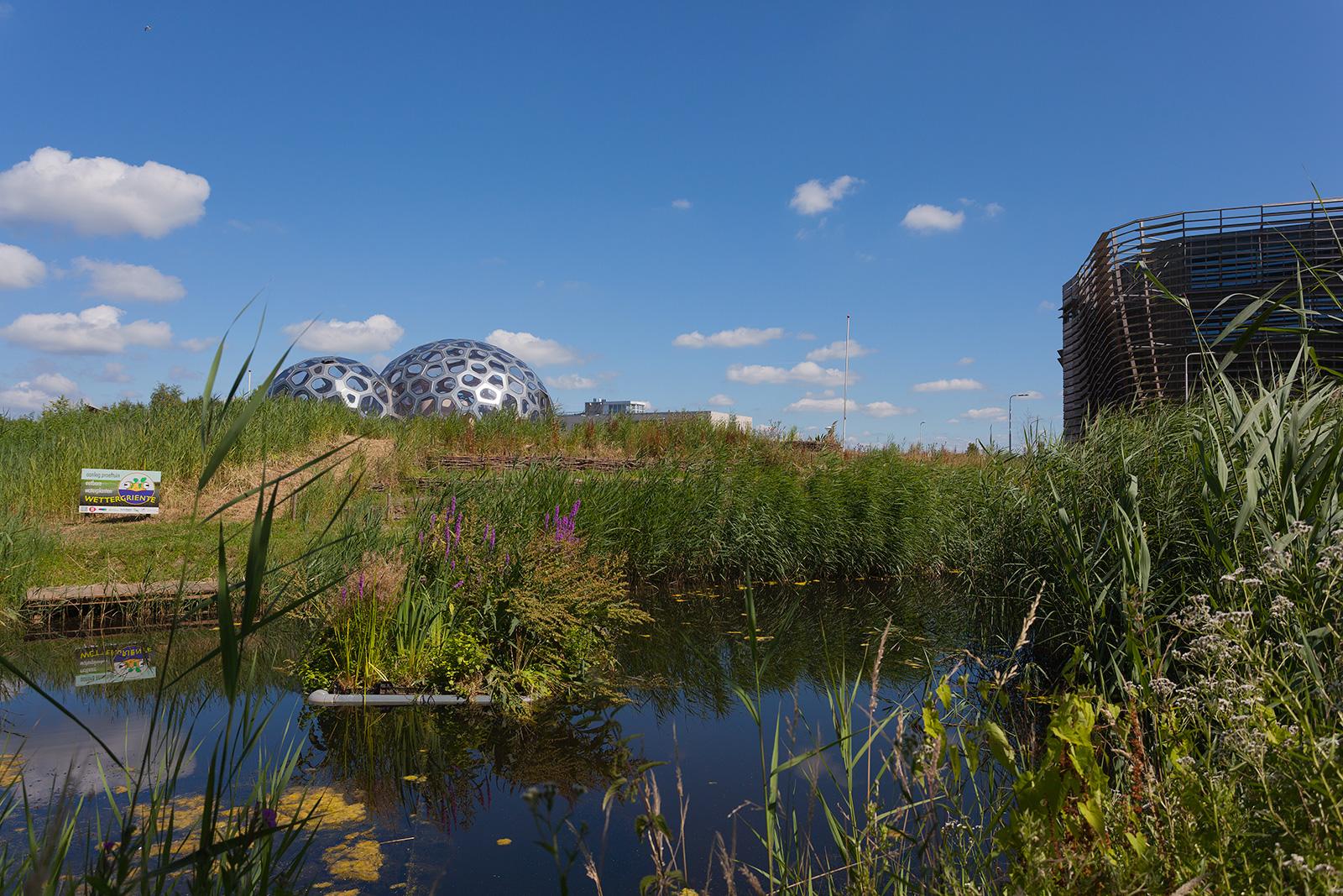 <p>WaterCampus, proeftuin eetbare waterplanten</p>