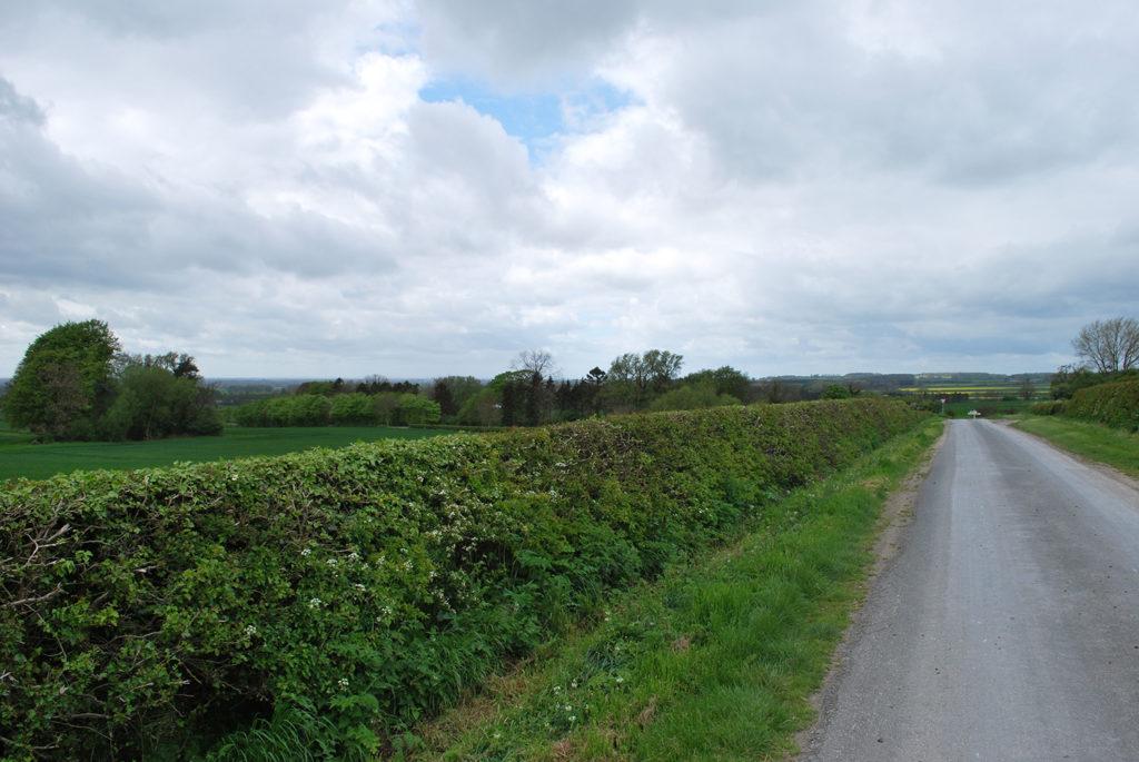 Hagen langs de weg in Yorkshire (UK), beeld Robbert Guis