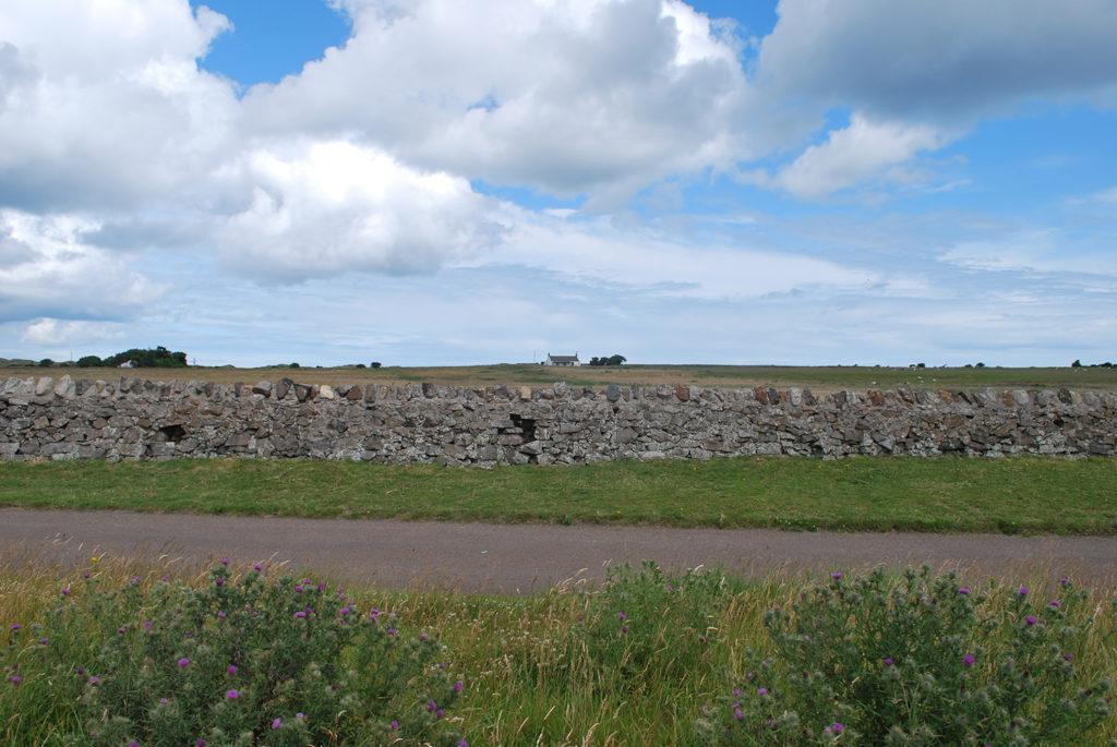 Stenen muur begrenst verschillende velden, maar is tegelijkertijd een windscherm voor het vee in Nothumberland (UK), beeld Robbert Guis