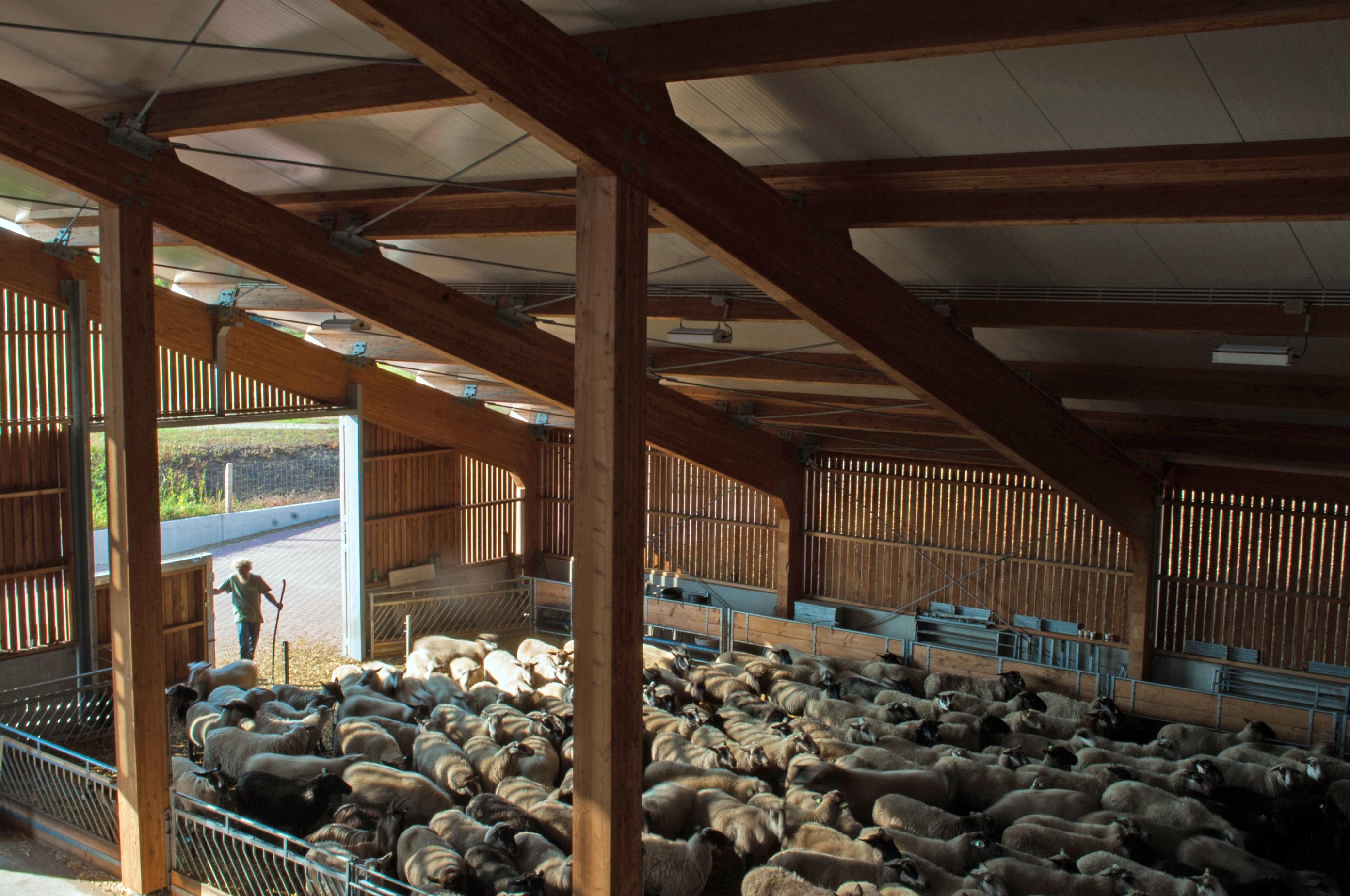 <p>De schapen overnachten in de kooi. De constructie van de schaapskooi bestaat volledig uit hout. De buitenmuren zijn open voor de ventilatie. Beeld: Jette Marie Versteegh</p>