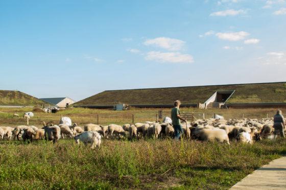 Het redden van het Hoogveen – Schaapskooi het Bargerveen door DAAD architecten