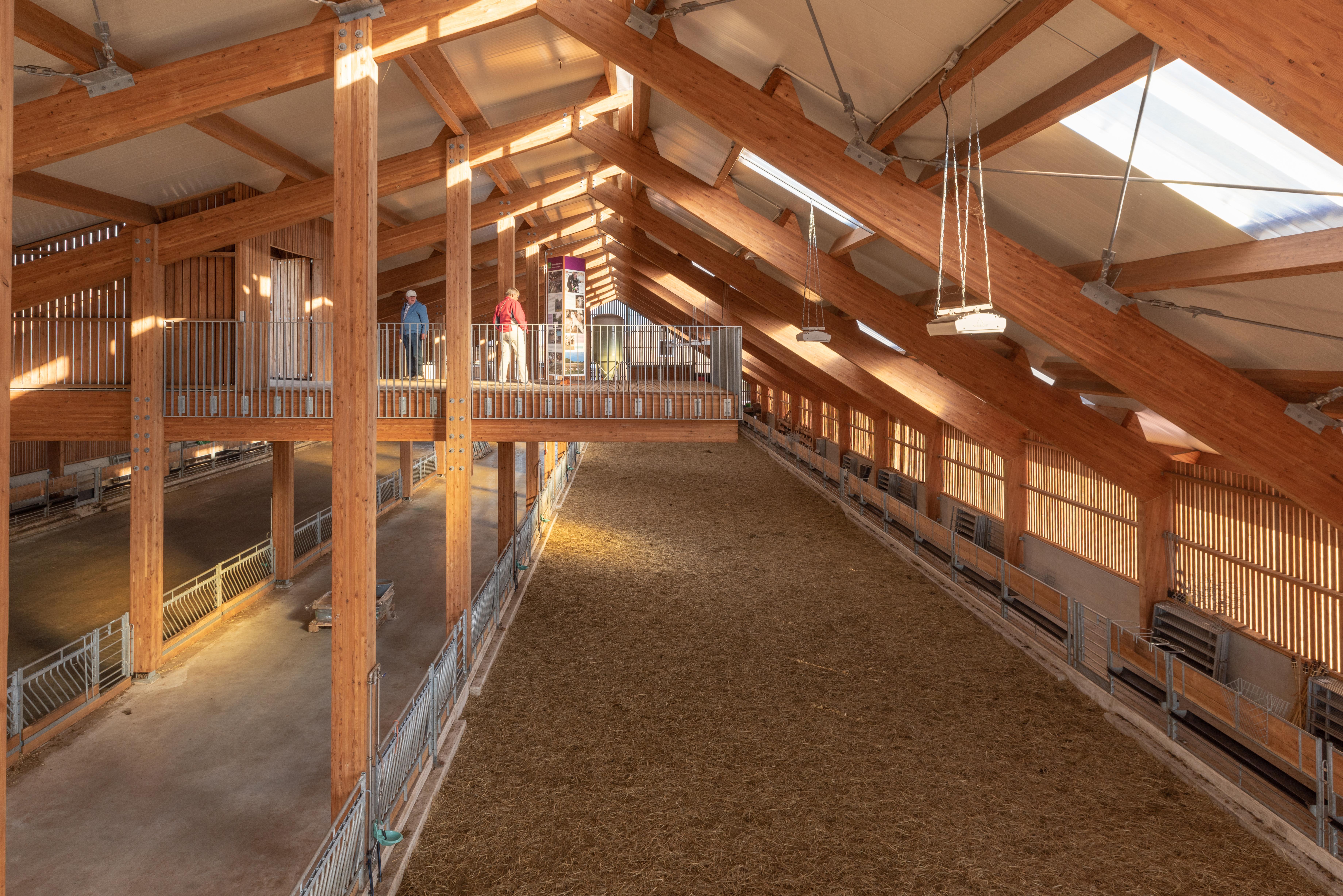 <p>Een lang balkon steekt de stal in, zodat bezoekers een kijkje kunnen nemen zonder de herders voor de voeten te lopen. Beeld: Walter Frisart FOTOwerk</p>