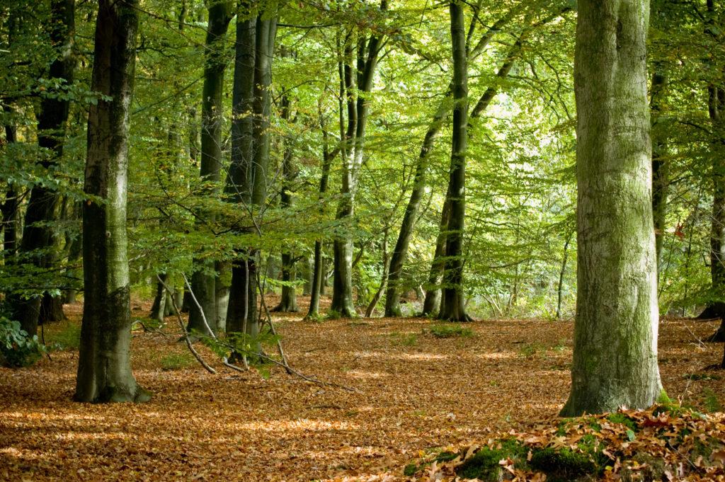 Bos in Nederland, beeld Shutterstock