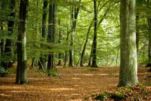 Blog – De herbebossing van Nederland
