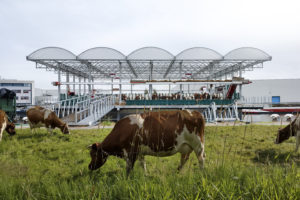 ARC19: Floating Farm Dairy – GOLDSMITH.COMPANY