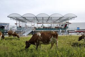 ARC19: Floating Farm Dairy – GOLDSMITH.COMPANY