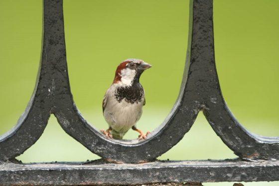 Vogelbescherming lanceert Award Natuurinclusief bouwen