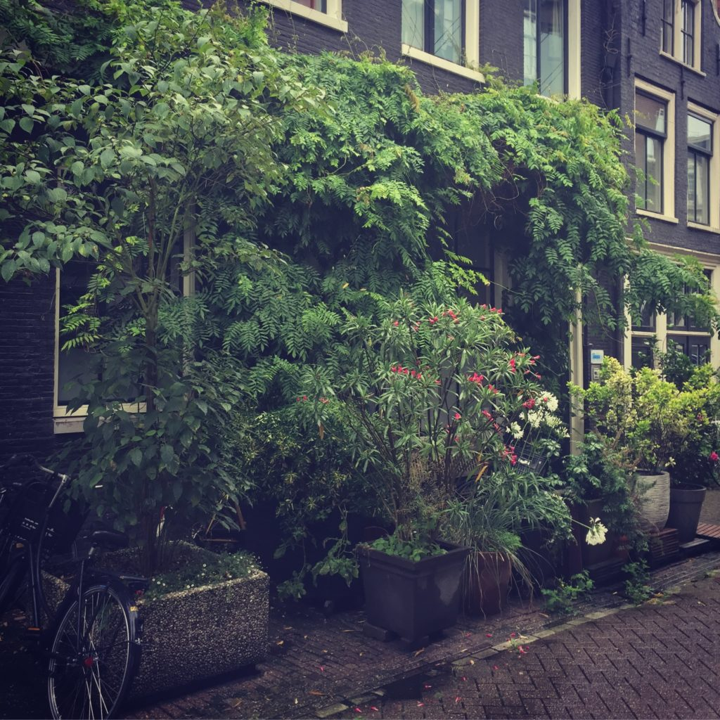 Natuur die zijn plek verovert in de binnenstad van Amsterdam. Beeld Robbert Guis